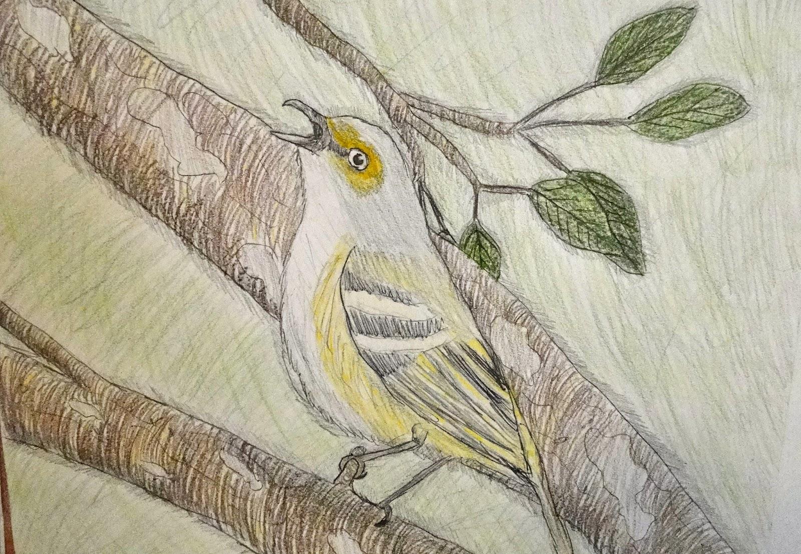 1600x1107 Birds, Etc. Drawing Birds