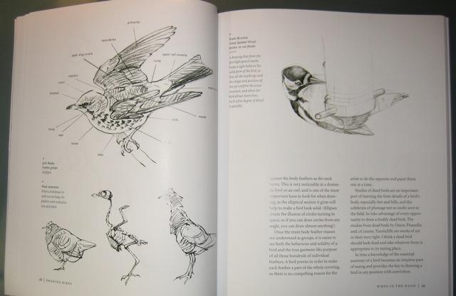 640x416 Drawing Birds Art Books Reviewed