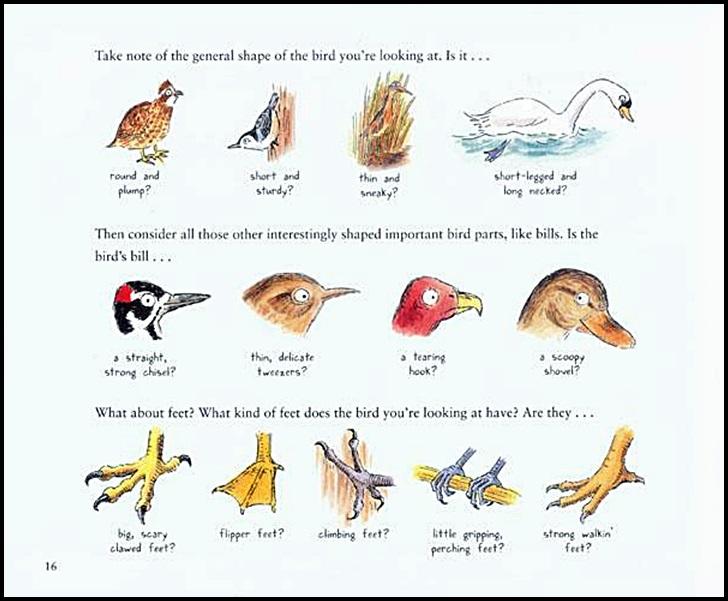 728x601 Look Up! Bird Watching In Your Own Backyard