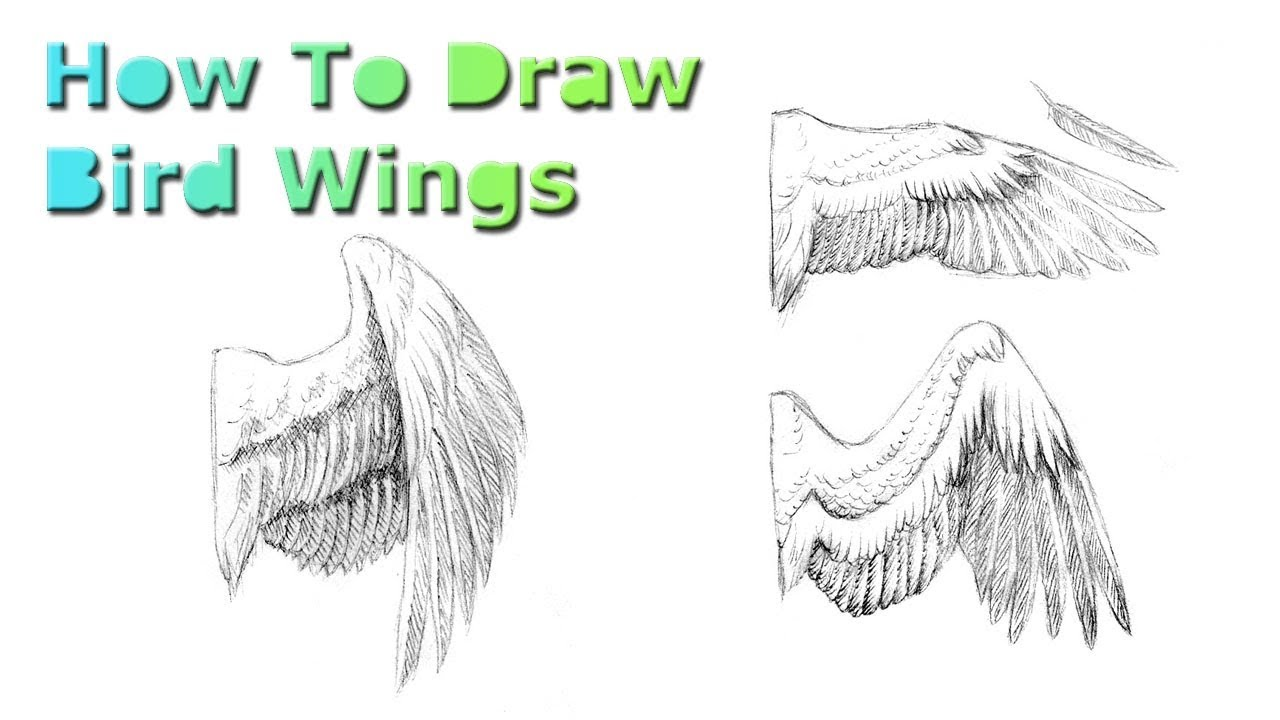 1280x720 How To Draw Bird Wings