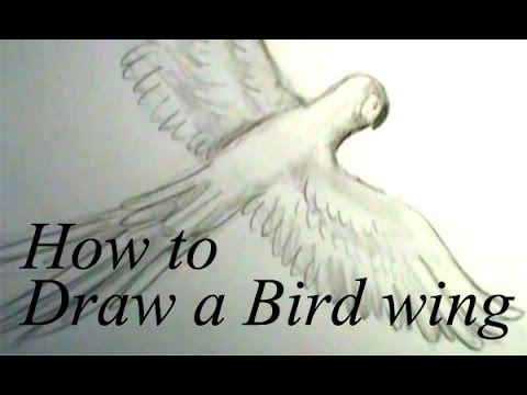 480x360 How To Draw A Bird Wing