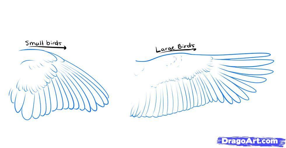980x506 How To Draw A Flying Bird Art Bird, Drawings
