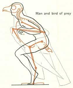 250x300 How To Draw Birds
