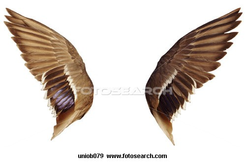 500x329 To Draw Angel Wings