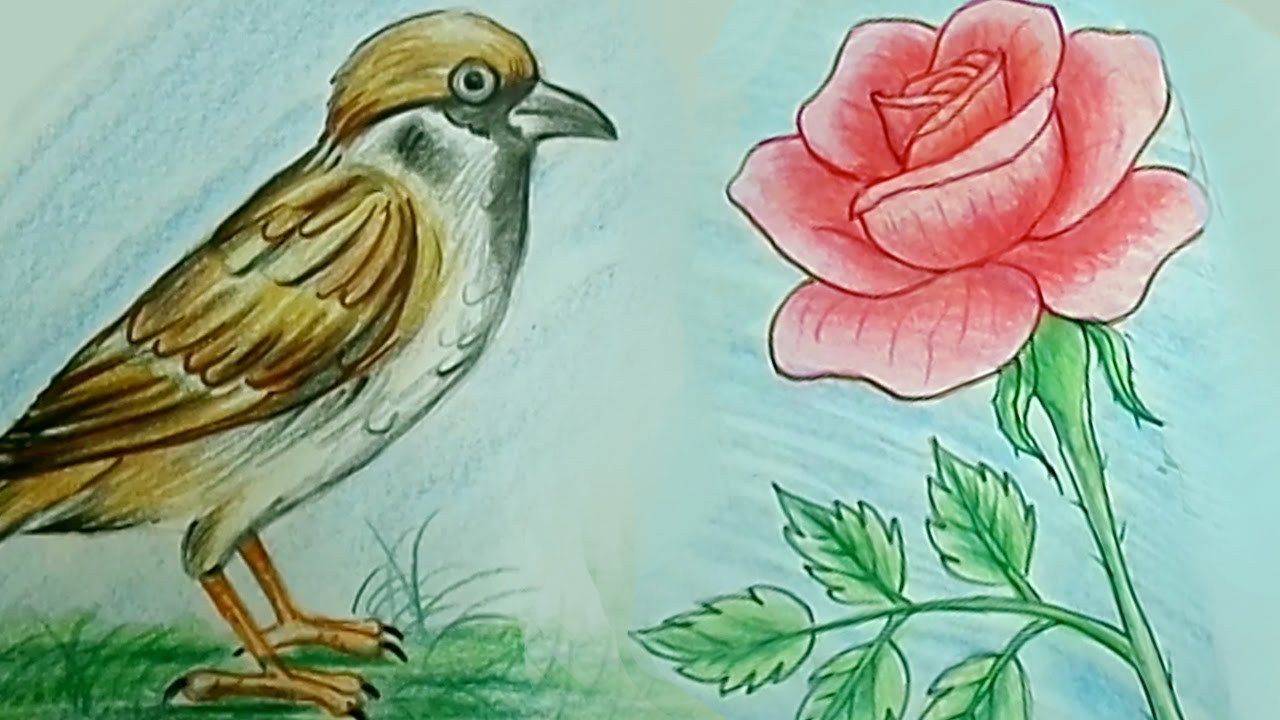 1280x720 Bird,s Pencil Drawings Flowers How To Draw Rose Flower Tweet Bird