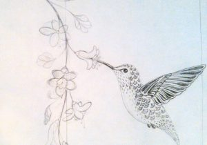 300x210 Drawings Of Hummingbird And Flowers Drawing Birds Luv2draw