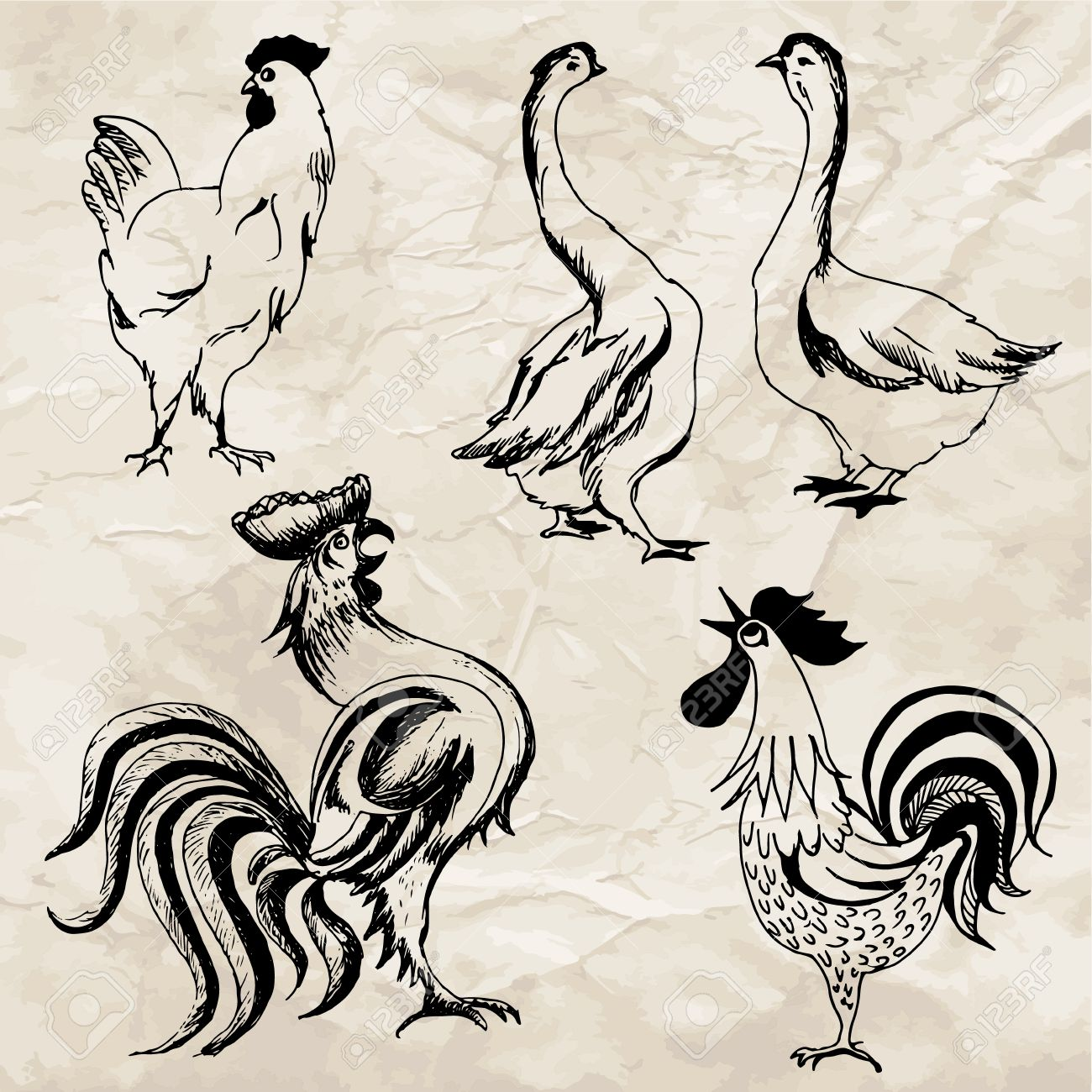 1300x1300 Hand Drawn Illustrations Of Birds. Drawings Of Rooster, Goose