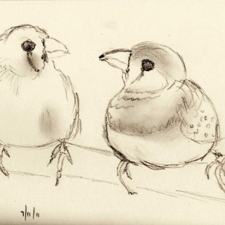 320x320 Tag For Love Birds Drawings Love Bird Drawing Birds Of Feather