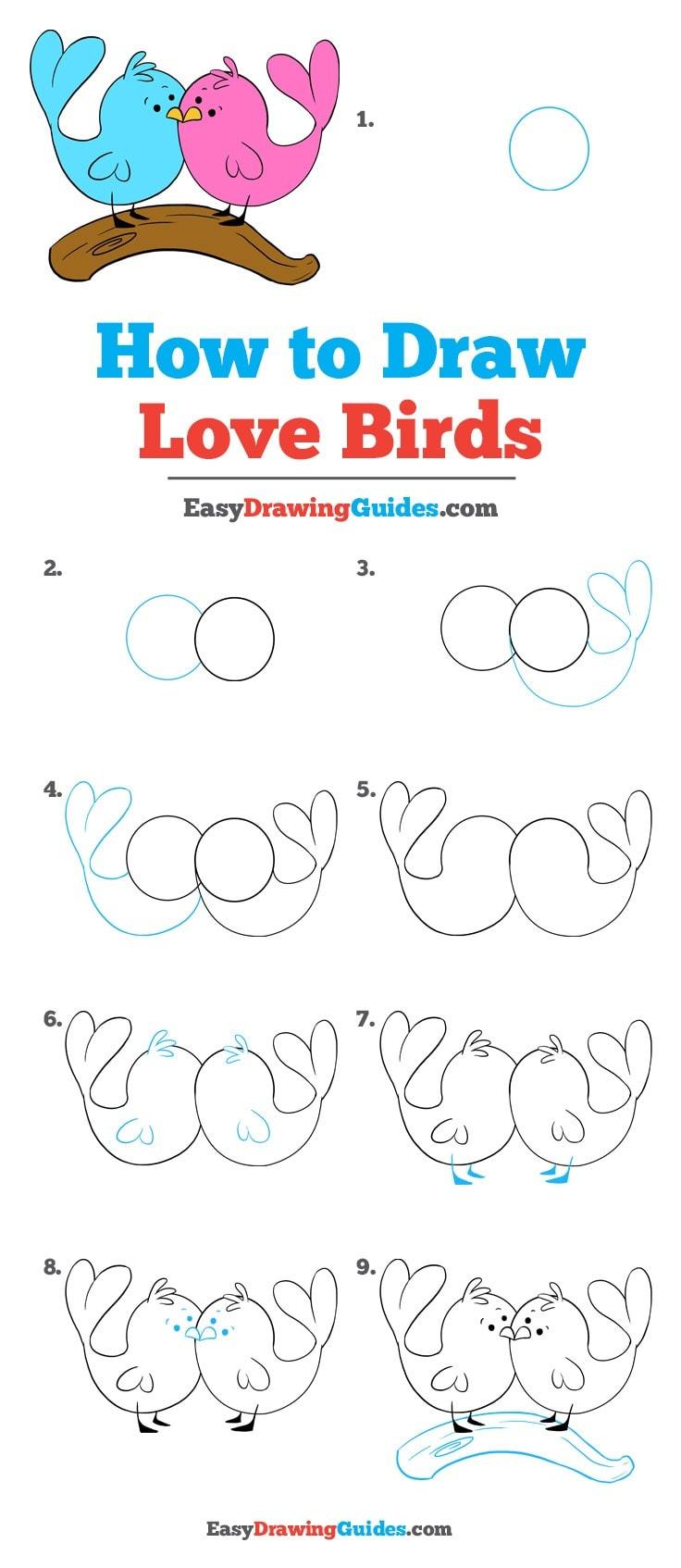 736x1694 How To Draw Love Birds