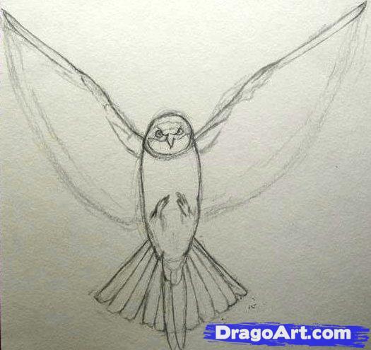 525x495 How To Draw A Realistic Bird Draw Real Bird Step