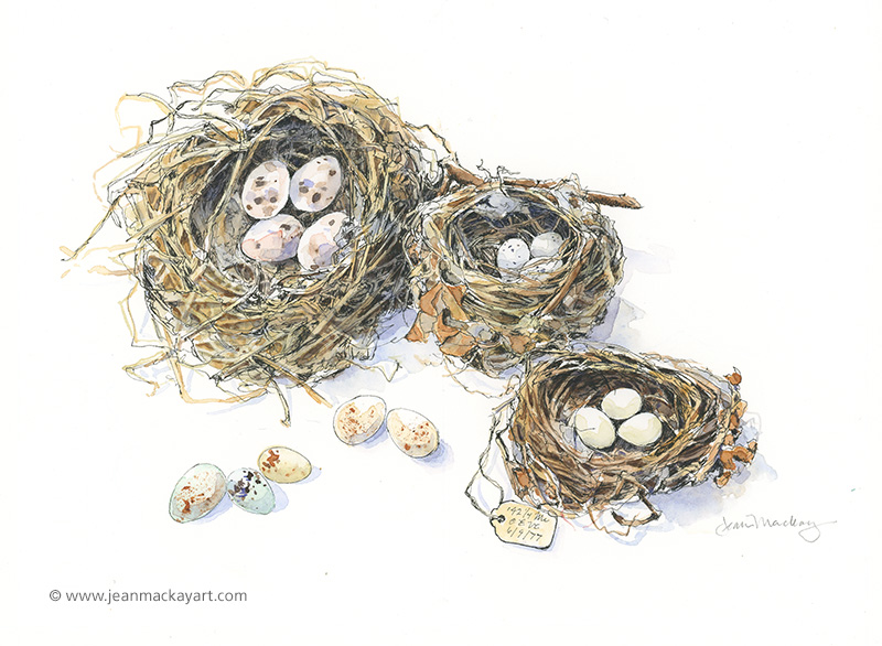 Line Drawing Nest : Birds nest drawing at getdrawings free for personal use