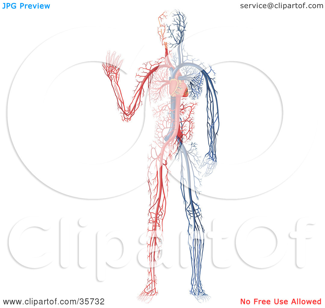 Upper Body Anatomy Diagram Empty - Data Wiring Diagrams •