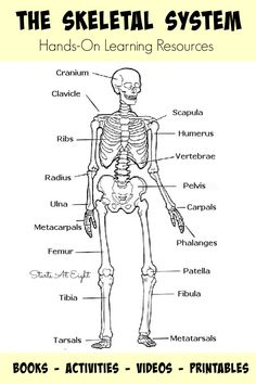 236x354 Blank Diagram Skeleton Human Body Label The Blank Worksheet