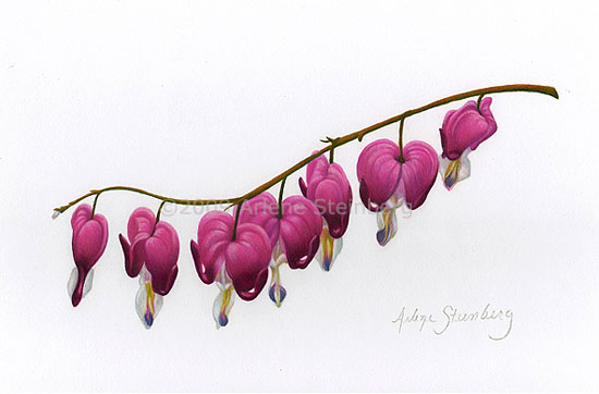 550x362 40 Awesome Bleeding Heart Flower Images Tattoo