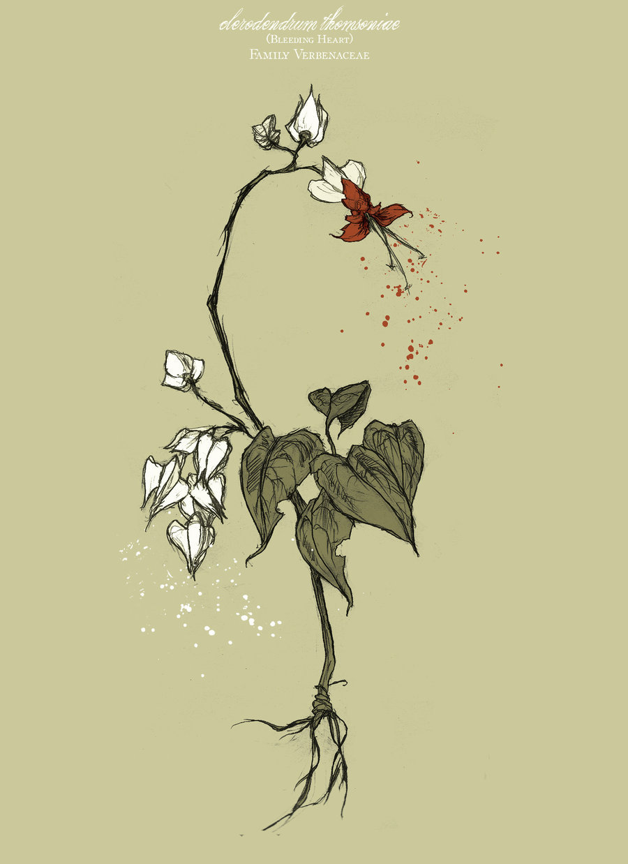 900x1238 Bleeding Heart By Abigaillarson