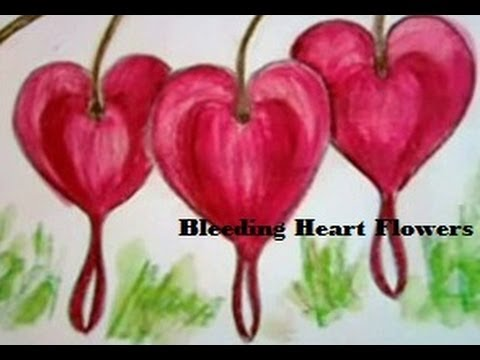 480x360 How To Draw A Bleeding Heart Flower And Color Them Colour