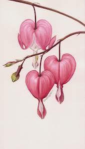 170x297 Bleeding Heart Flower Drawing