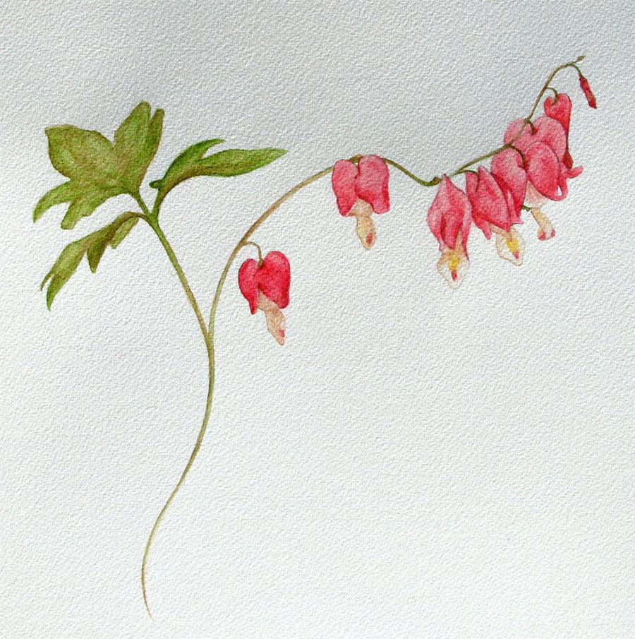 900x905 Bleeding Heart Flower Tattoos Bleeding Heart Plant Study By