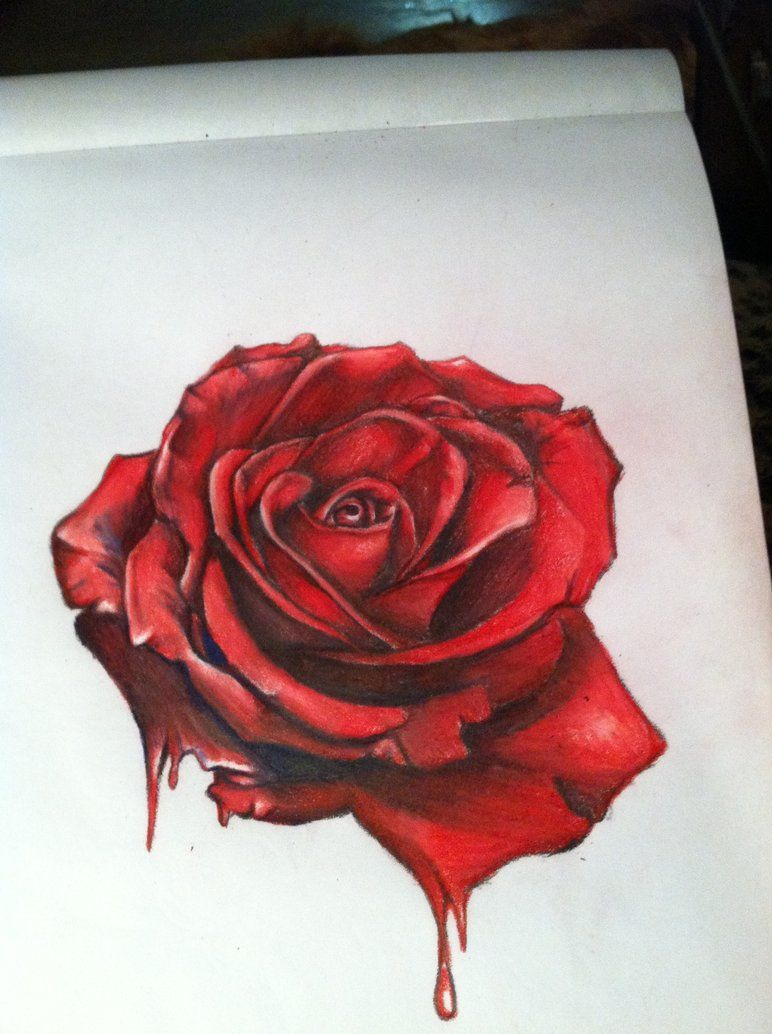 772x1034 Bleeding Rose Drawing You Can Always Paint The White Roses