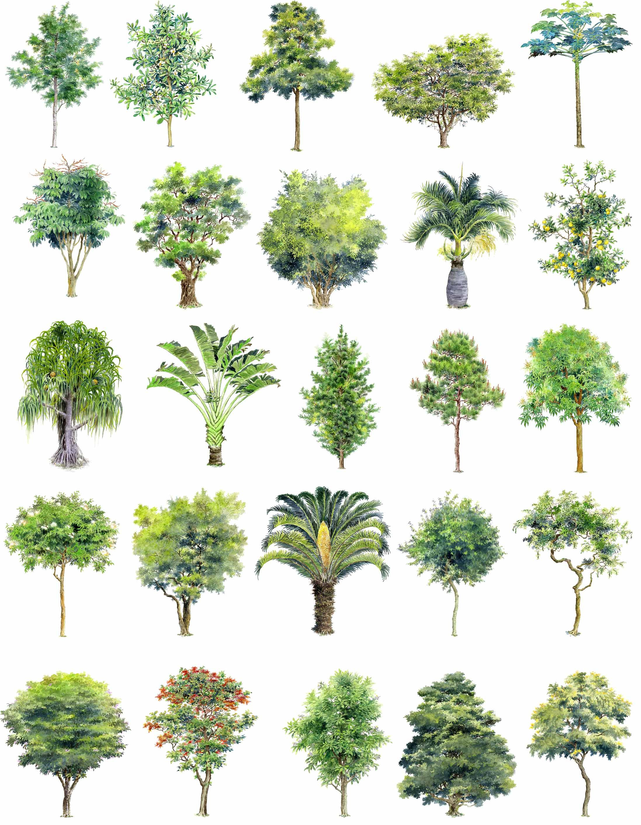 2195x2824 Hand Painted Psd Tree Blocks 2 Download Cad Blocks,drawings