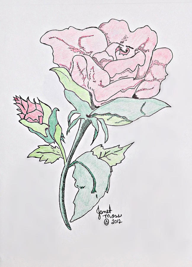 648x900 Blooming Rose Drawing By Janet Moss