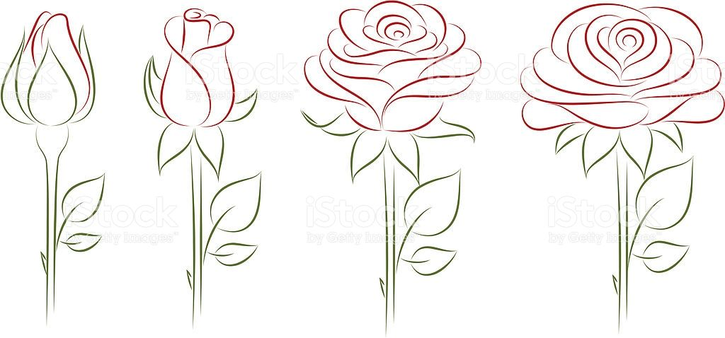 1024x478 Blooming Rose. Vector Illustration. Royalty Free Stock Vector Art