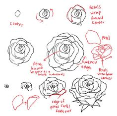 236x234 How To Draw Roses Opening In Full Bloom Step By Step Drawing