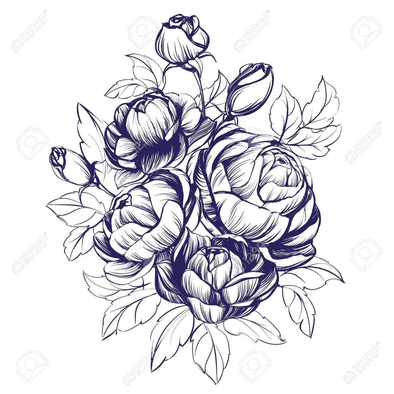 1300x1300 Floral Blooming Rose Branch Hand Drawn Vector Illustration Sketch