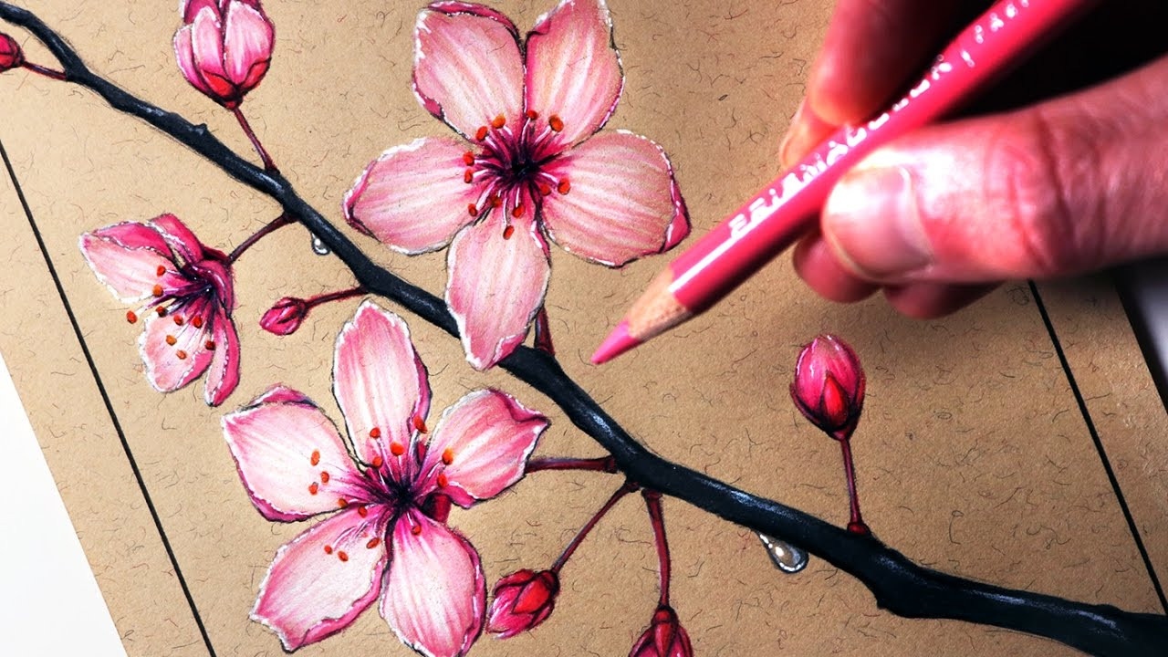 1280x720 How To Draw Cherry Blossoms