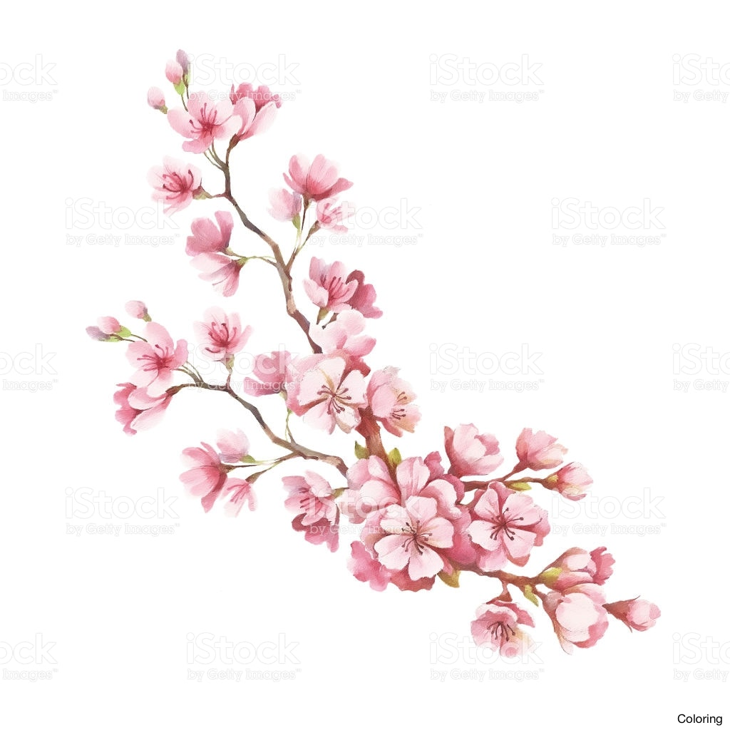 1024x1024 Maxresdefault Cherry Blossom Drawings Coloring How To Draw Easy