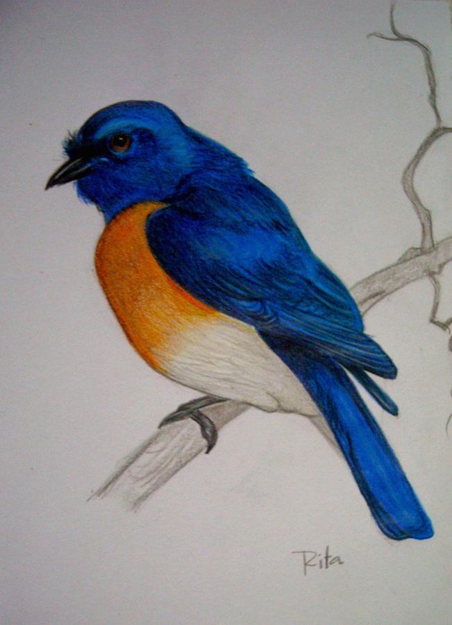 651x900 Blue Bird Drawing By Rita Fernandes