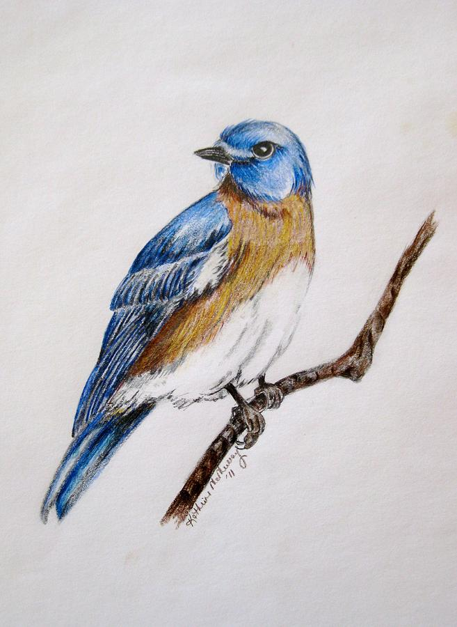 657x900 Bluebird Guardian Drawing By Kathrine Mcmurray