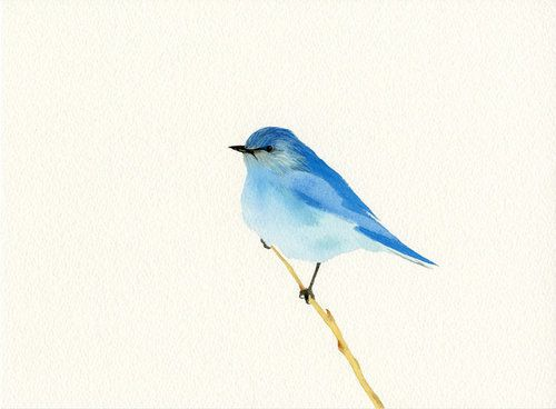 500x368 Gallery Blue Bird Sketch,