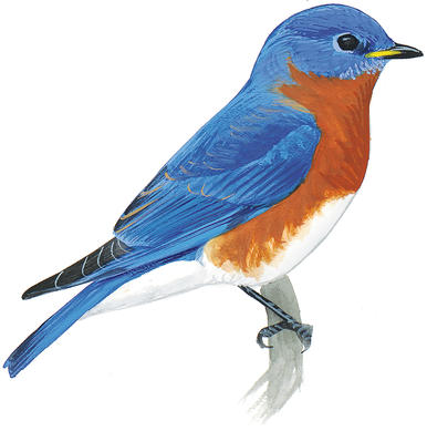 386x389 Wildscaping Is Better For Birds Audubon Minnesota