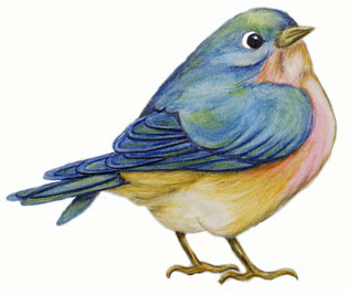 316x266 Bluebird Drawing This Fat Little Bluebird Is The Drawing I Will