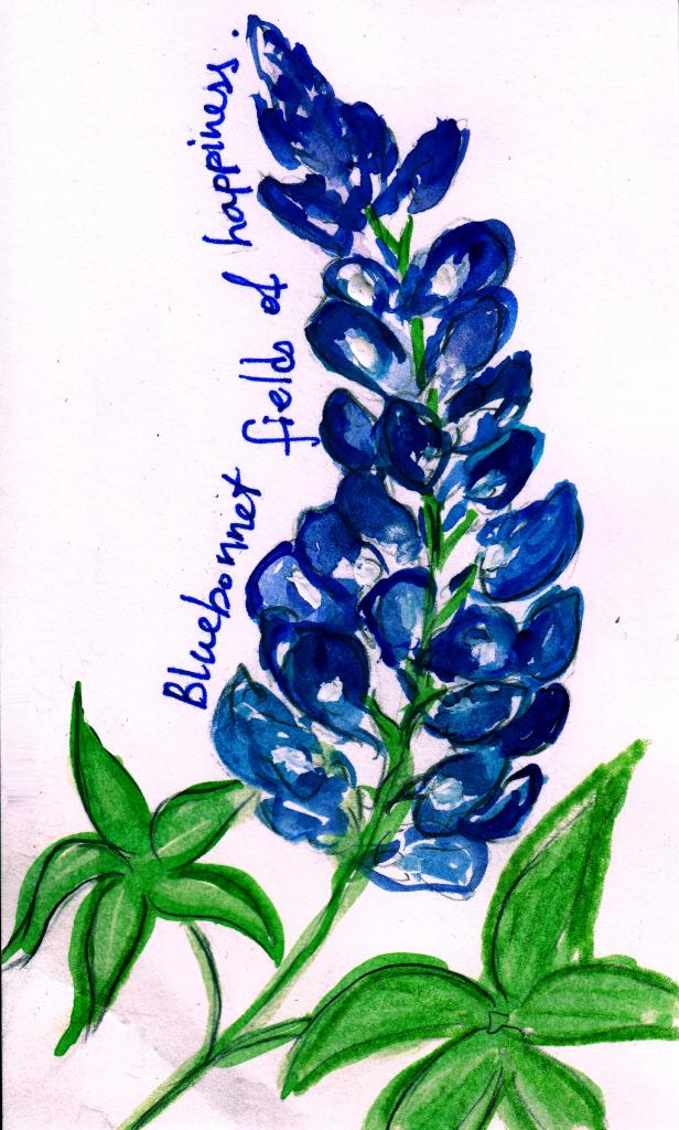 616x1024 Bluebonnet Drawing