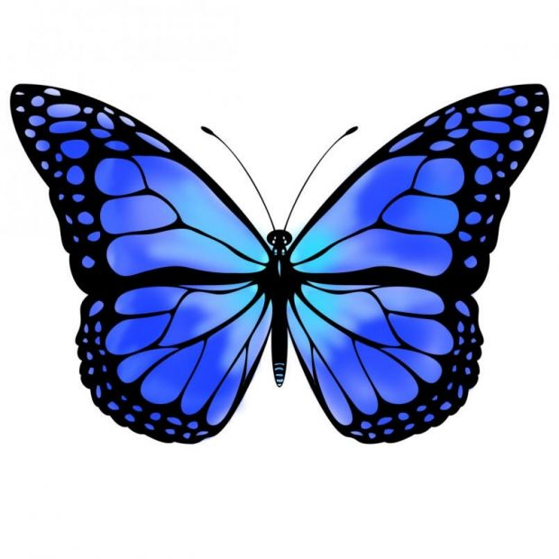 620x620 Blue Monarch Butterfly Blue Butterfly By Vicksterxp How Bout