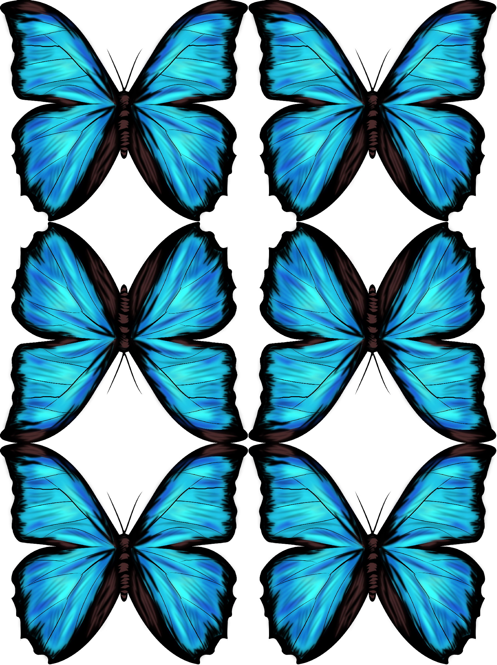 1600x2140 Blue Morpho Free Downloadable Drawing And Tutorial Myrte