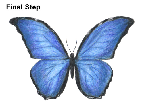 500x386 How To Draw A Butterfly (Blue Morpho)
