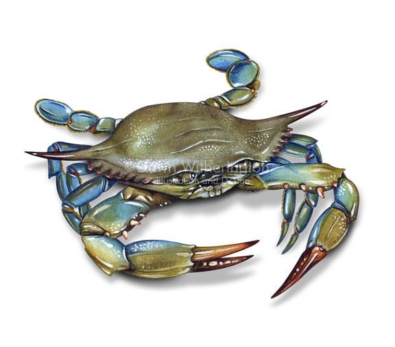 576x505 Blue Crab Tattoo Pinspiration