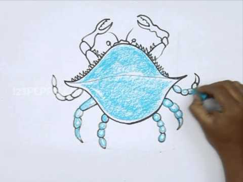 480x360 How To Draw A Blue Crab