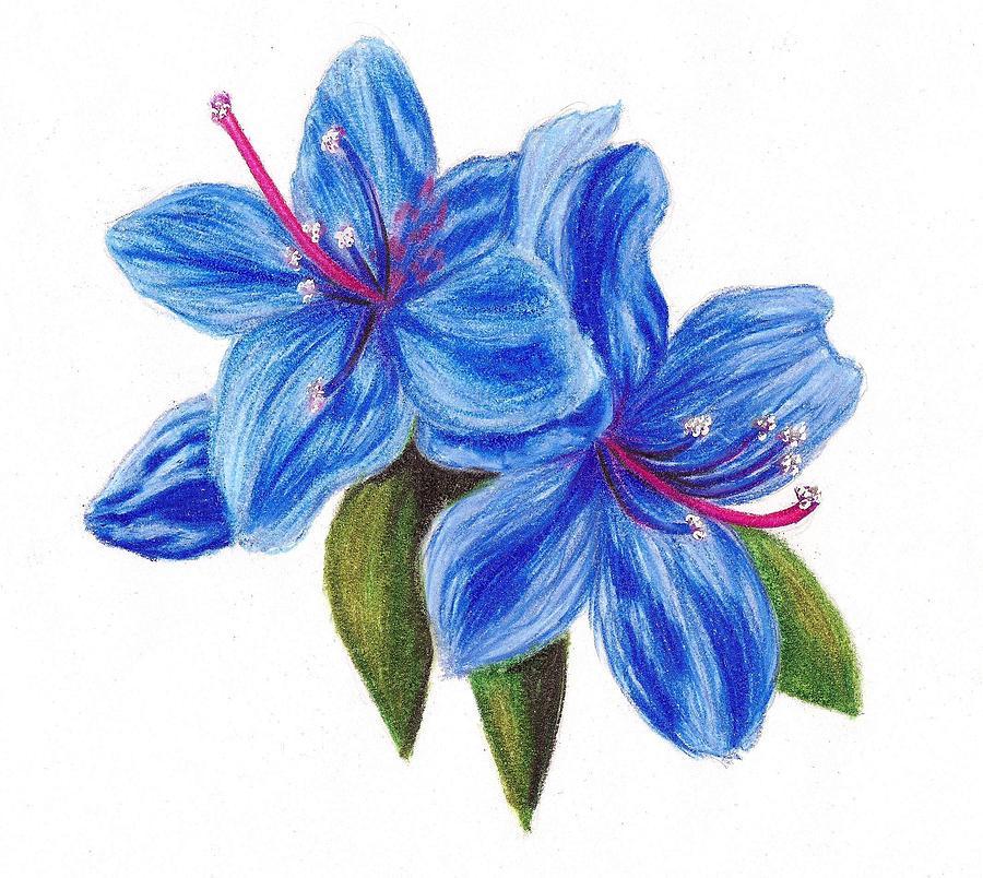 900x804 Blue Azalea Drawing By Scarlett Royal