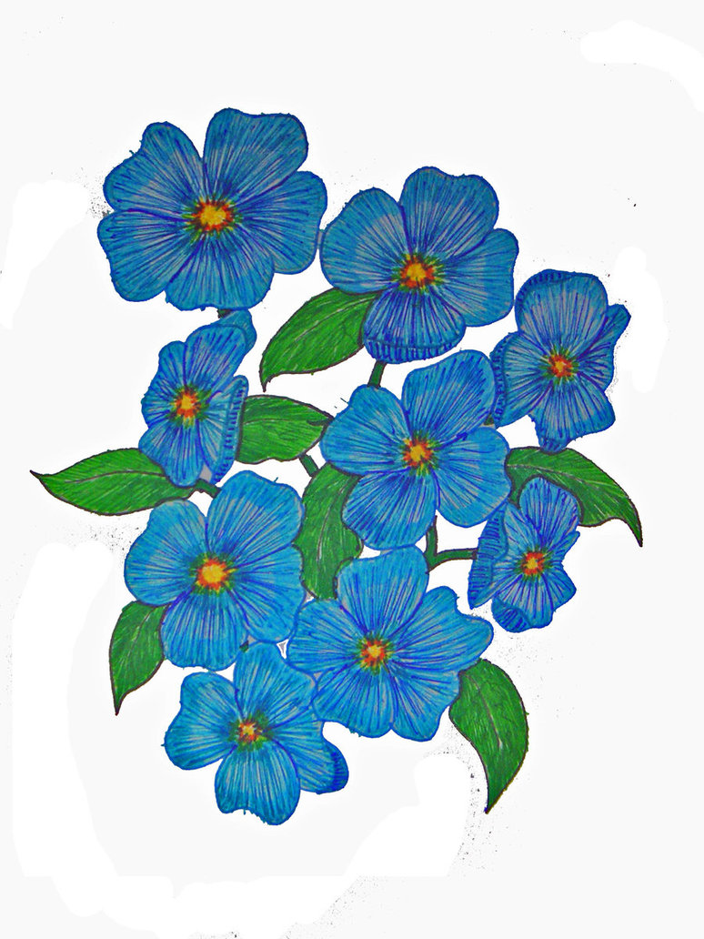 Blue flowers drawing at getdrawings free for personal use blue 774x1032 blue flower drawing by amoira on deviantart izmirmasajfo