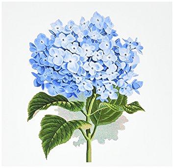 355x344 3drose Blue Hydrangea Flowers Vintage Art