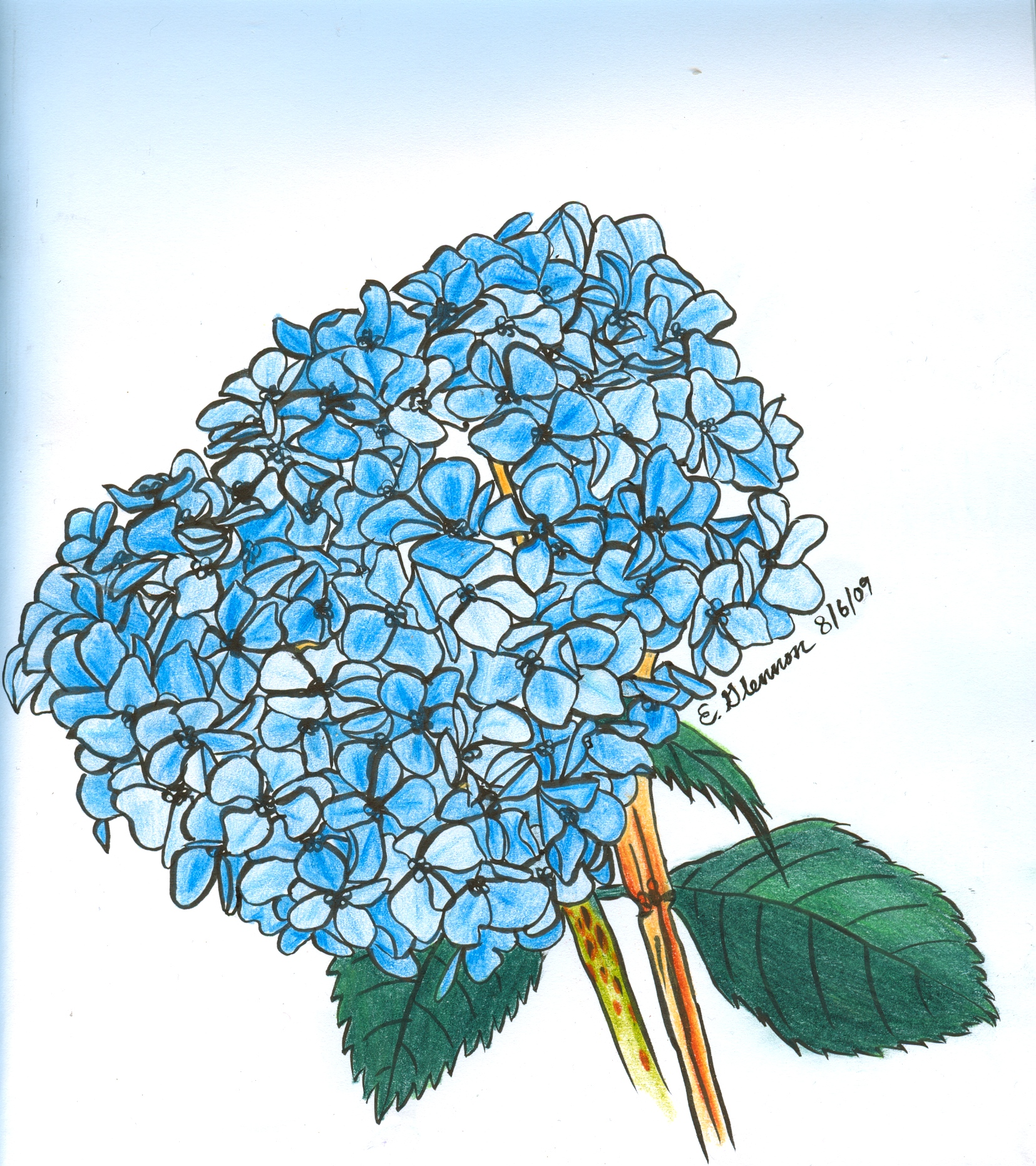 1655x1861 Hydrangea Love In The Spaces