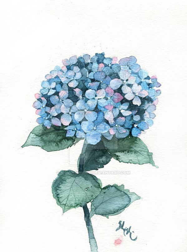 600x809 Hydrangea Blue By Nguyenshishi