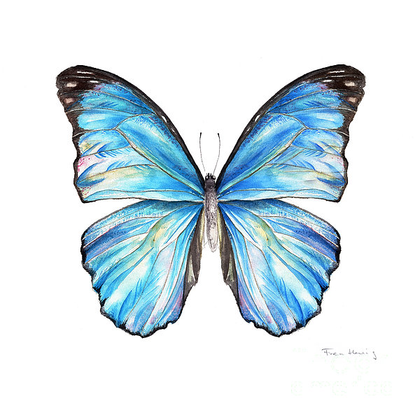 600x600 Blue Morpho Butterfly Canvas Print Canvas Art By Fran Henig
