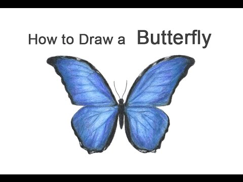 480x360 How To Draw A Butterfly (Blue Morpho)
