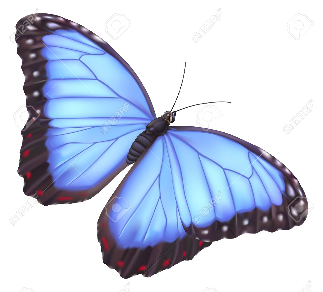 1300x1173 Illustration Of A Beautiful Blue Morpho Butterfly Royalty Free