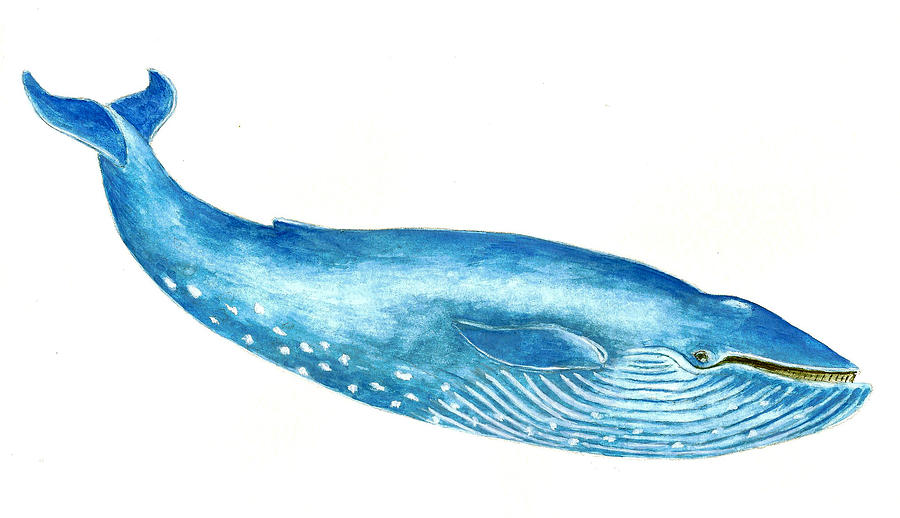 900x518 Blue Whale Painting